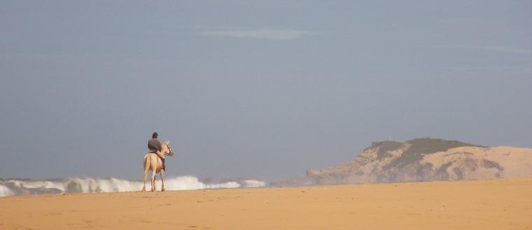 Horse scene