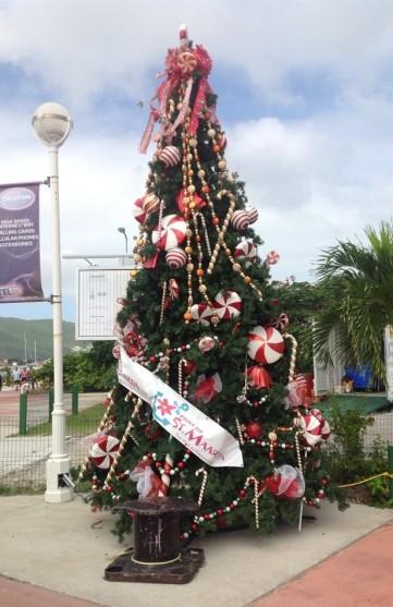 St Maarten tree 2
